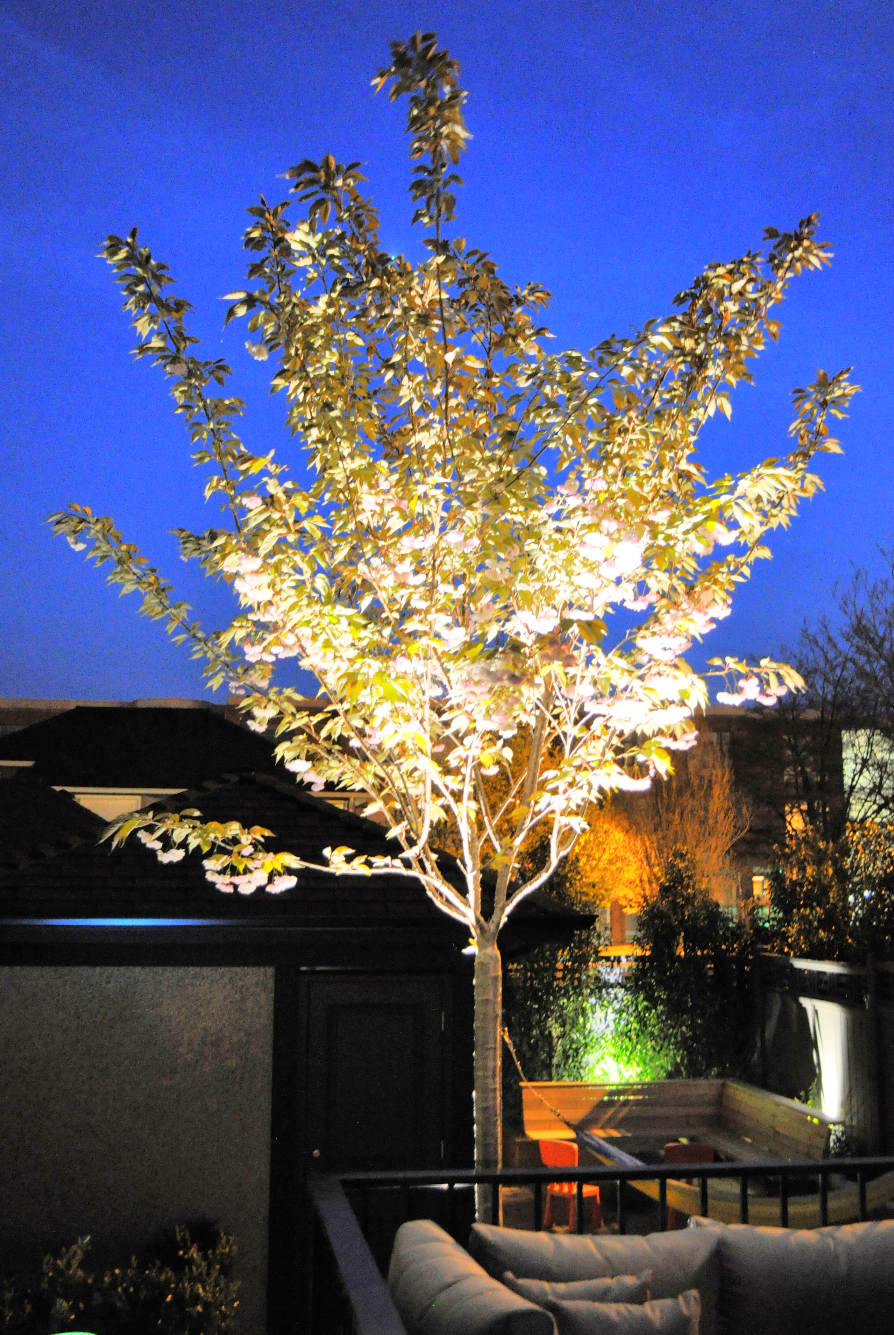 Garden Lighting and Irrigaiton