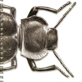 Entomologia elementare