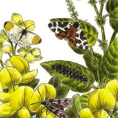 Farfalle e falene diurne