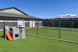 Outdoor Dog Play Area