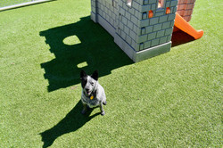 Dog in Outdoor Play Area