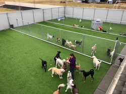 Dogs in all-day/daycare play in outdoor area