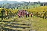 Chianti Ecomaratona - trails marathon, semi-marathon et 14 km