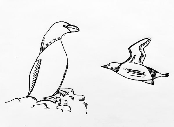 petits-pingouins.jpg