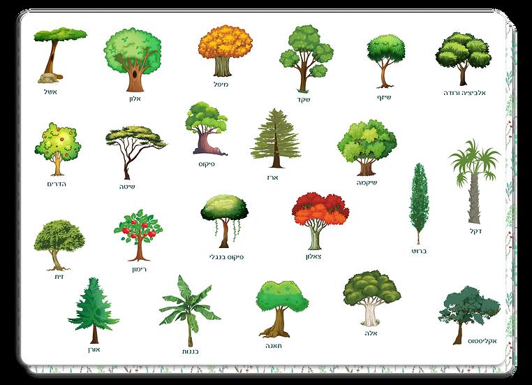 פלייסמט עצים מאויירים