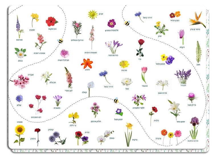 פלייסמט פרחי ארץ ישראל