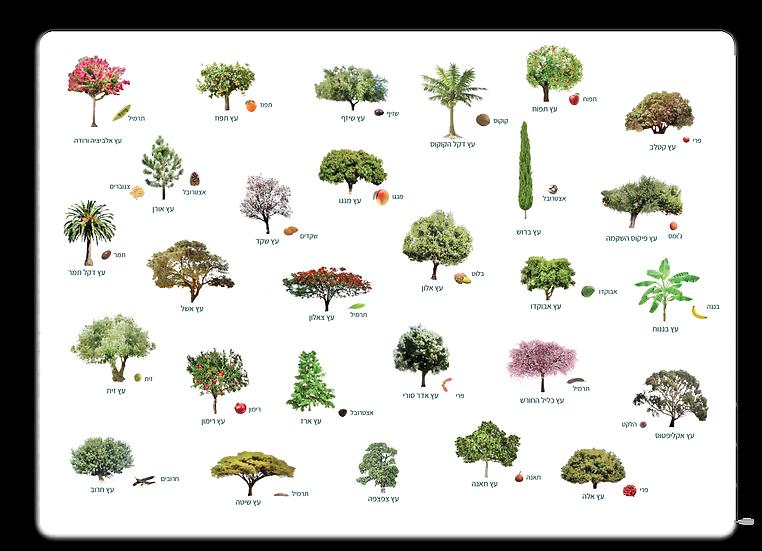 פלייסמט עצים ופירות