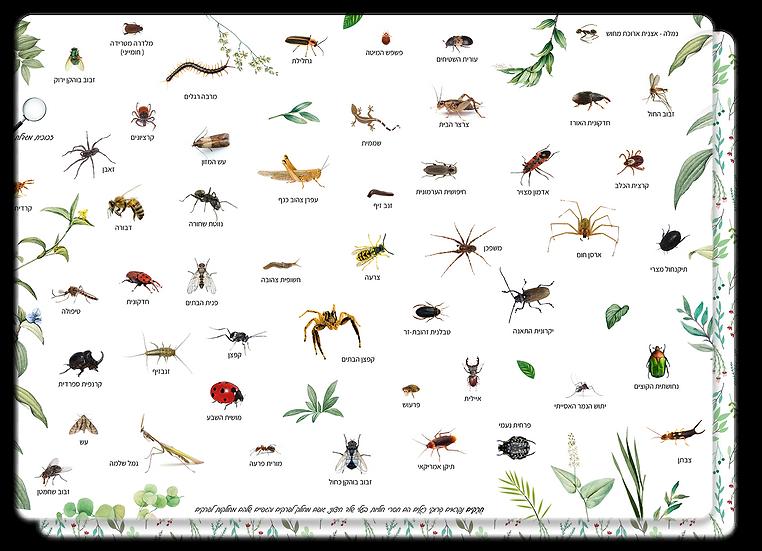 פלייסמט חרקים