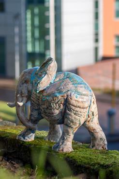 """Elephant""""Urban Walk"""""""