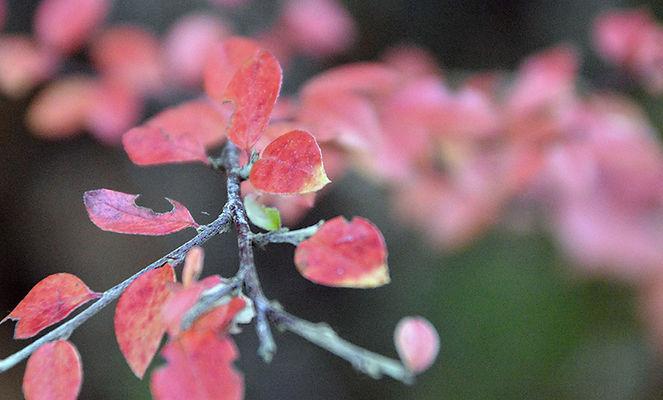 rosa-blader-1160x700.jpg