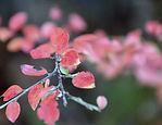 rosa-blader-1160.jpg