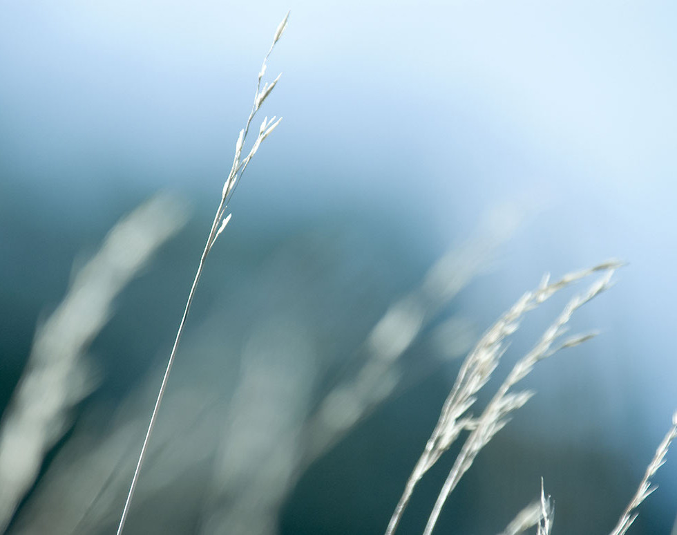 straw-1160.jpg