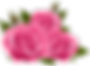 Pink_Roses_PNG_Clip_Art_Image.png