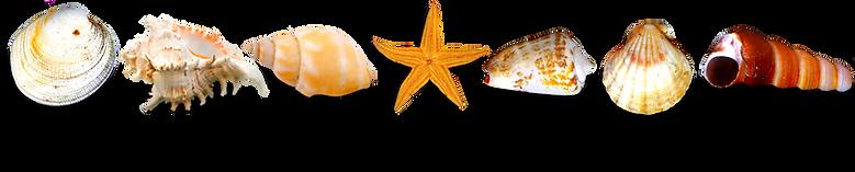 kisspng-template-icon-sea-border-element
