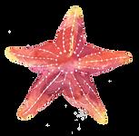 kisspng-starfish-paper-starfish-5a812ebb