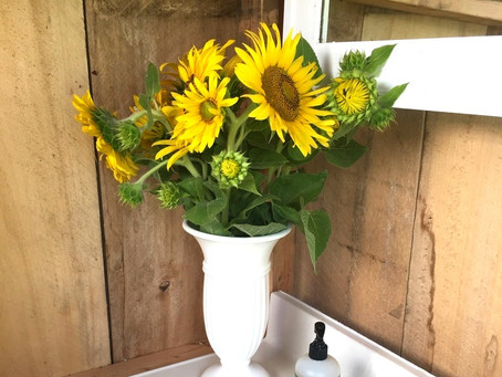 Sunflowers: More than just an instrument in your romantic gesture tool kit