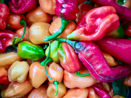 How chili peppers taught me what love is