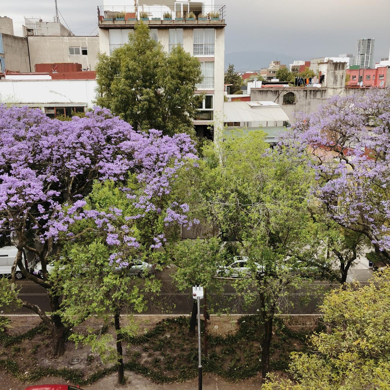 Mexico City | Hello_Francois