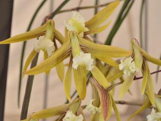 An Update on Dendrobium section Rhizobium