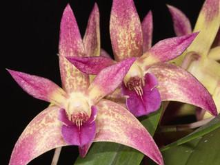 Ira Butler Awards - DUNO bred plants reign #3