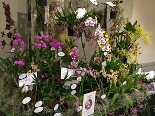 Mingara Orchid Fair 2015