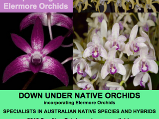 Down Under & Elermore Orchids on Facebook