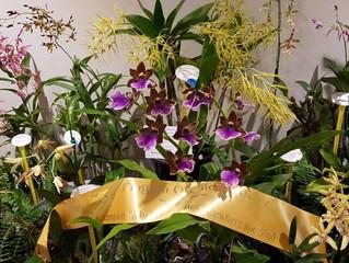 Mingara Orchid Fair 2017