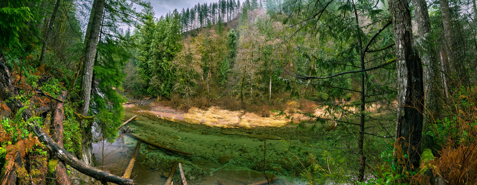Washougal River Bank- Gifford Pinchot Forest