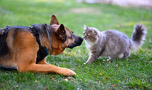 cat-and-dog-playing-on-grass.jpg
