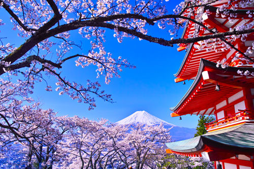 mount-fuji-with-cherry-blossoms-in-the-f