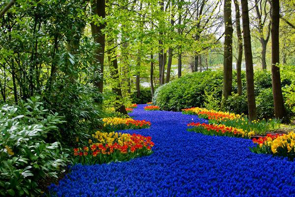Spring-blossom-in-Keukenhof-park-in-Amst