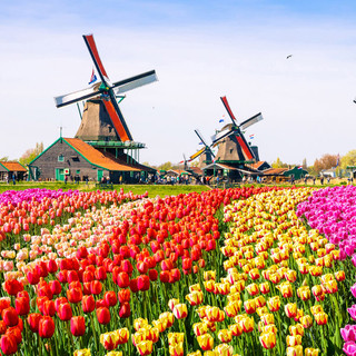 Learn about the Netherlands