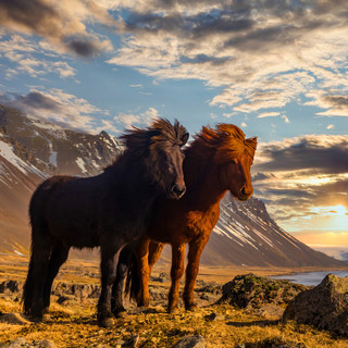 Learn about Iceland!