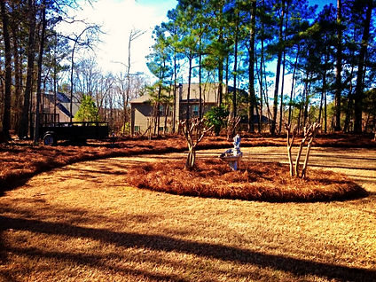 Freshly cut and manicured lawn with new pine straw.