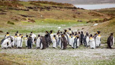Counting Penguins — How to foster relationships on a remote team.