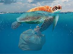 schildkröte-plastik2_clickstraw.png