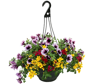 Hanging basket.png