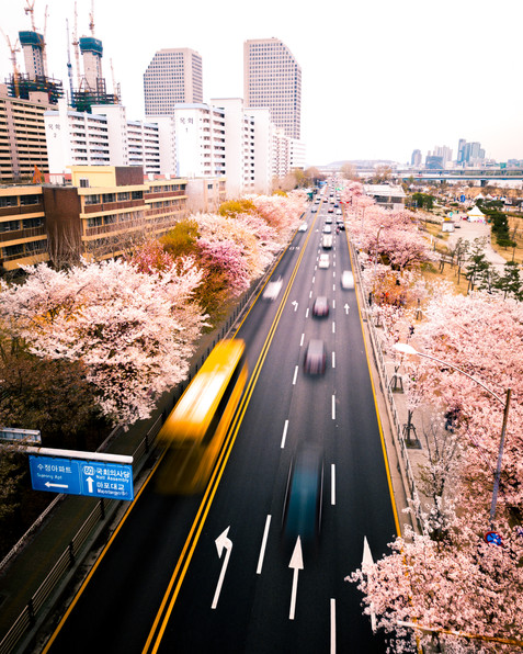 Seoul Cherry Blossoms Traffic