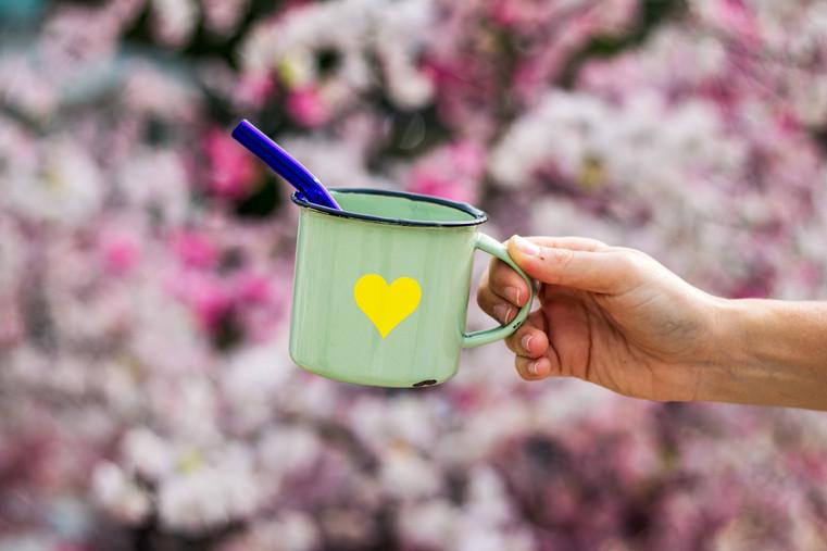 Cherry Blossoms (1).jpg