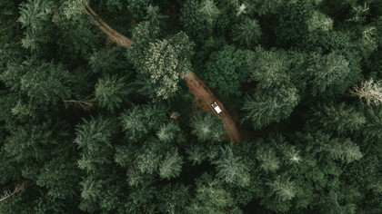 Jeep Forest