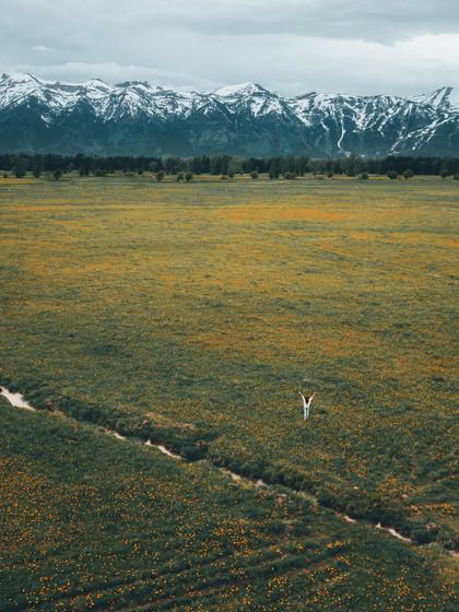 Yellowstone Flower Field