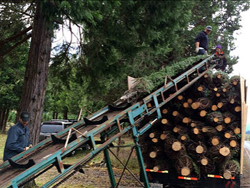 Christmas Tree Loading Conveyer.png