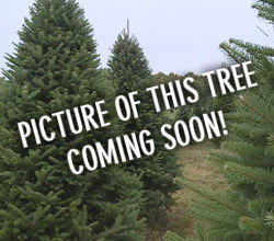 Christmas-Tree-Coming-Soon.jpg