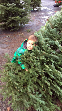 Boy Hugging Christmas Tree.png