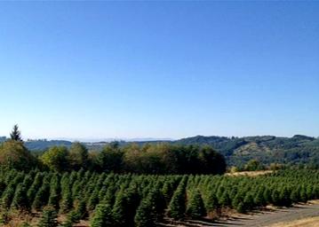 Christmas Tree Farm.png