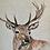 Thumbnail: Watercolour Stag Cushion