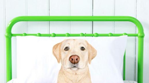 Labrador Pillow Case