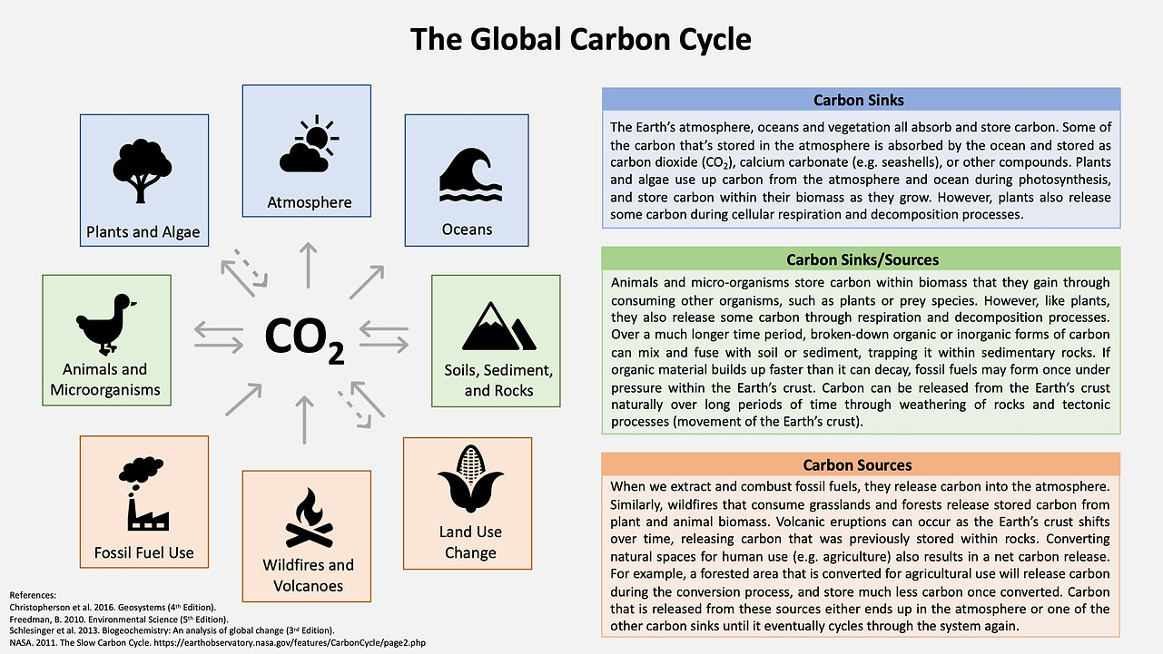 Global Carbon Cycle.jpeg