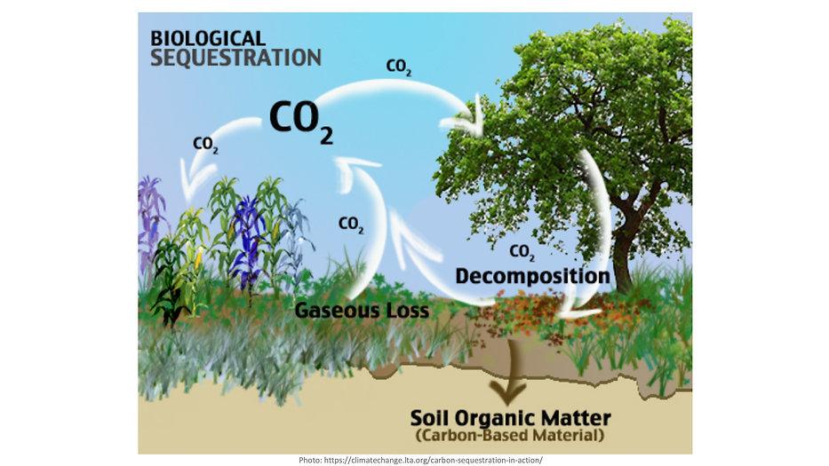 Carbon Sequestration 4.jpeg