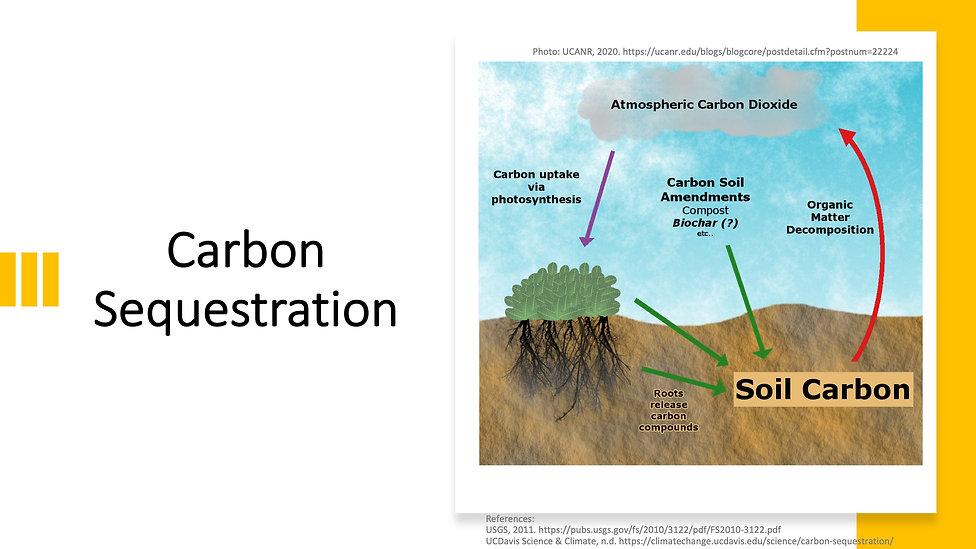 Carbon Sequestration.jpeg
